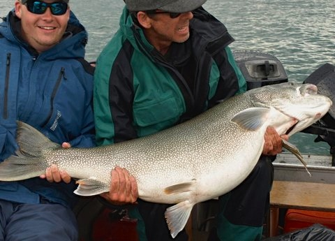 70 lbs Great Bear Lake Trout