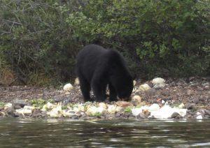 great_bear_lake_20121130_1631239411