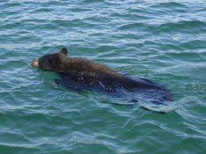 great_bear_lake_20121130_1983884056
