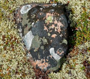 What's Not to Lichen?