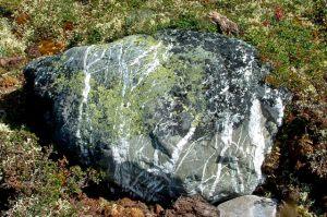 What's Not to Lichen?