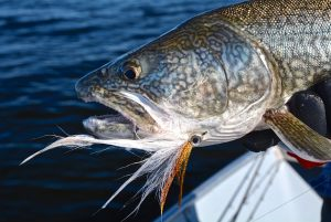 lake-trout-2016