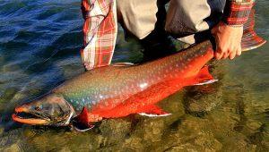 char-fishing