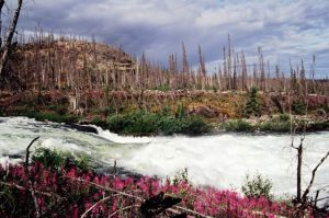White Eagle Falls