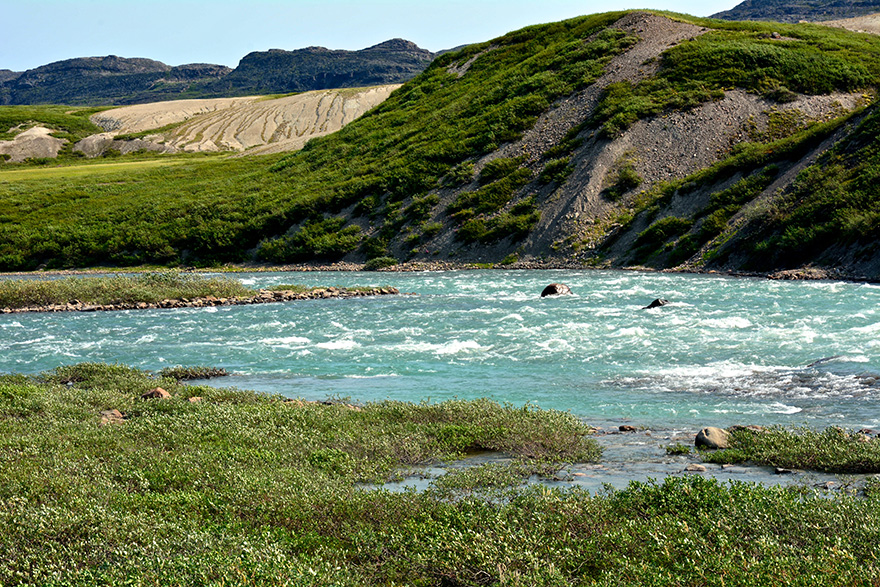 Tree River, Arctic July 2016